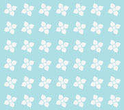 Flowers seamless texture. White blue flowers seamless texture Stock Photos