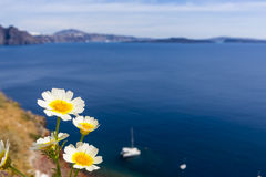 Flowers and seascape Stock Image