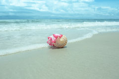 Flowers in seashell vase on the beach Stock Image