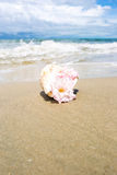 Flowers in seashell vase on the beach Stock Images