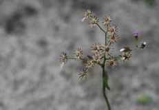 Flowers of season Stock Photo