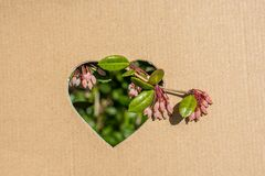 Flowers seen through heart shape. Cut out of cardboard Royalty Free Stock Photos
