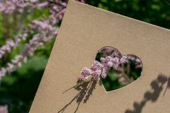 Flowers seen through heart shape. Cut out of cardboard Royalty Free Stock Images