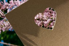 Flowers seen through heart shape. Cut out of cardboard Stock Images