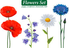 Flowers Selection Isolated on White Background. Poppy, cornflower, chamomile, bell Royalty Free Stock Images