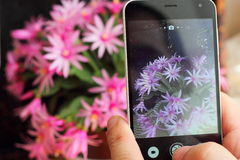 Flowers selfie Royalty Free Stock Photos
