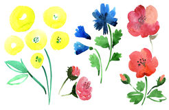 Flowers Set Royalty Free Stock Images