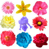 Flowers Set Stock Photo