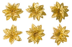 Flowers Set, Abstract Floral Decoration, Golden Decor Isolated Royalty Free Stock Photos