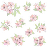 Flowers set. Apple tree bloom decorative elements Royalty Free Stock Photography
