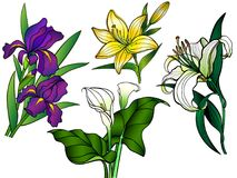 Flowers. Set of flowers. Bouquets. Linear flowers and leaves with a gradient. Callas, lilies, irises. Garden flowers. Set of garden flowers. Lilies, irises and Royalty Free Stock Images