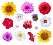 Flowers set isolated on white background.  Royalty Free Stock Images