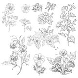 Flowers, set, outline Stock Images