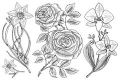 Flowers set, roses with leaves and buds and daffodil and orchid. Wedding botanical garden or plant. Vector illustration Royalty Free Stock Photos