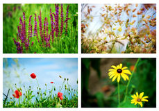 Flowers. Set of various flowers in nature Stock Photography