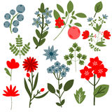Flowers set Royalty Free Stock Image