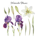 Flowers set of watercolor irises, lily and leaves Royalty Free Stock Image