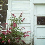 Flowers on a shed. Flowers growing along an old shed Stock Photos