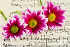 Flowers on sheet music Stock Photo