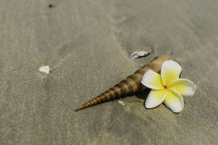 Flowers and shell on beach Royalty Free Stock Images