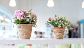 Flowers on the shelves Stock Image
