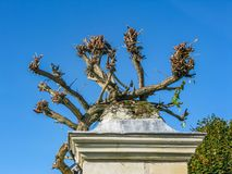 Flowers and shoots of grapes growing on top of the column in the Loire royalty free stock images
