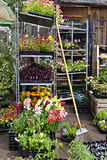 Flowers shop. Outdoors shop where to buy flowers and plants Royalty Free Stock Image