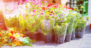 Flowers in shop Royalty Free Stock Photos