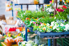 Flowers in shop Stock Image