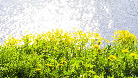 Flowers on shore of Lake stock footage