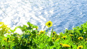 Flowers on shore of Lake Stock Photography
