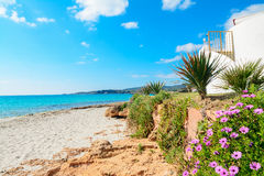 Flowers by the shore in Le Bombarde beach Royalty Free Stock Image