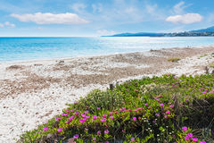 Flowers by the shore stock photography