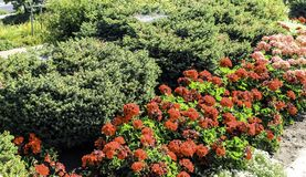 Flowers, Shrubs, and a Spider Web. Grace the Boise Depot area Royalty Free Stock Photography