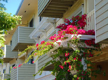 Flowers on the Side of and Apartment Building stock photos