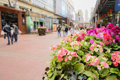 Flowers at side of pedestrian street in spring Royalty Free Stock Images