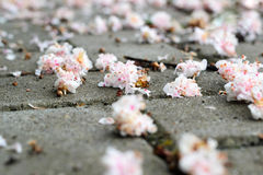 Flowers on a sidewalk Royalty Free Stock Photography