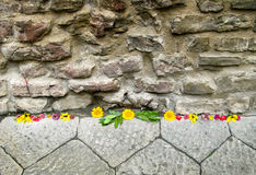 Flowers on a sidewalk Stock Images