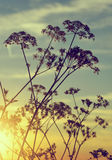 Flowers silhouette in the sunset. Royalty Free Stock Photos