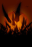 Flowers silhouetted at sunset. Illustration of silhouetted flowers with orange sunset background Stock Images