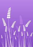 Flowers silhouettes on purple Stock Photography
