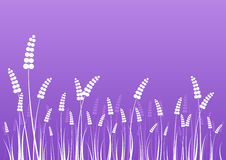 Flowers silhouettes on purple Royalty Free Stock Image