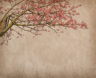 Flowers of the Silk Floss Tree, Chorisia Speciosa Royalty Free Stock Photography