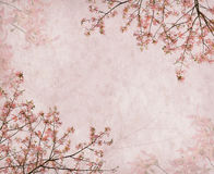 Flowers of the Silk Floss Tree, Chorisia Speciosa Stock Photos