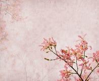 Flowers of the Silk Floss Tree, Chorisia Speciosa Stock Image
