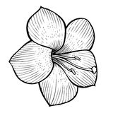Flowers sketch image Royalty Free Stock Images