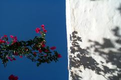 Flowers and sky. Flowers against blue sky, leaving a shadow on a white wall royalty free stock photo
