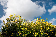 Flowers and sky Royalty Free Stock Photos