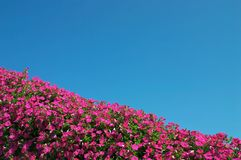 Flowers and sky Royalty Free Stock Photography