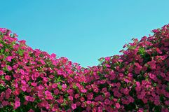 Flowers and sky royalty free stock images